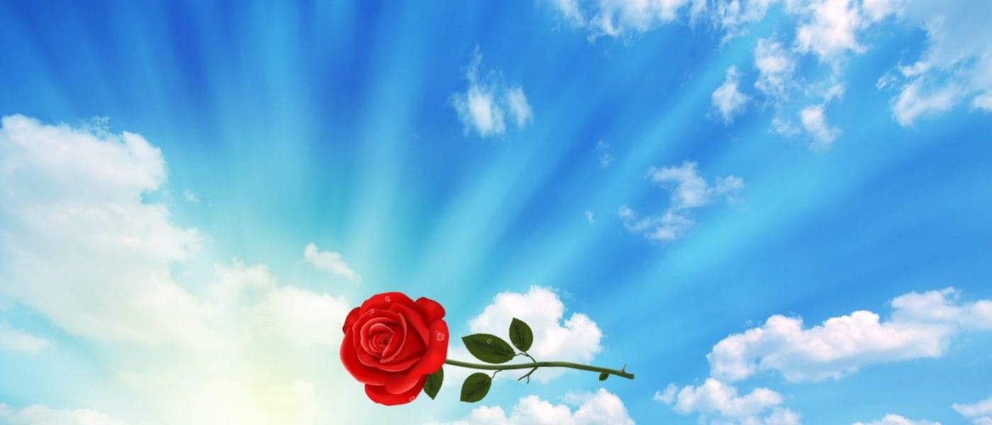 Rose in Cloudy Sky